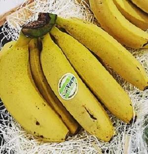 がっちりマンデー もんげーバナナ 岡山県産の国産バナナ D&Tファーム 販売